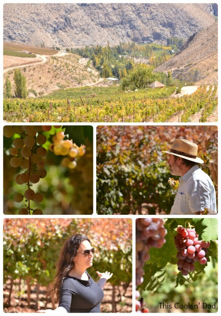 Chile Elqui Vineyard