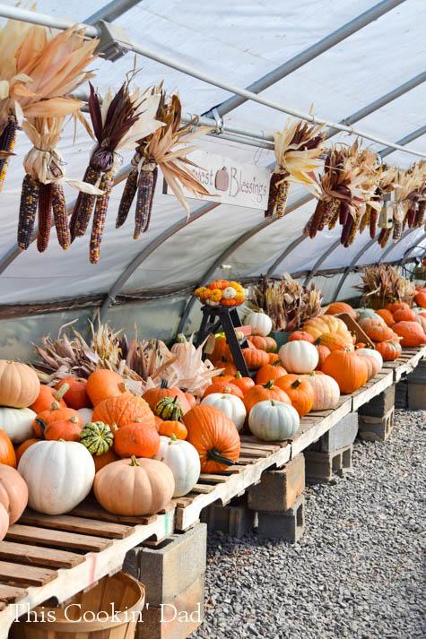 Miller Farms Pumpkins