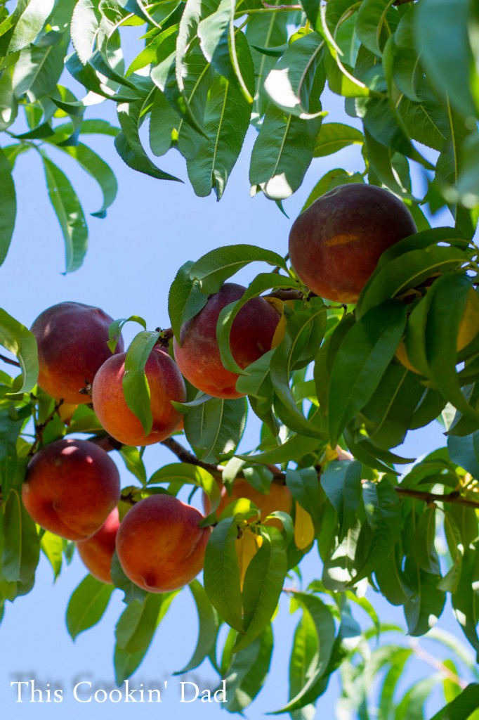 Peaches 2014-2