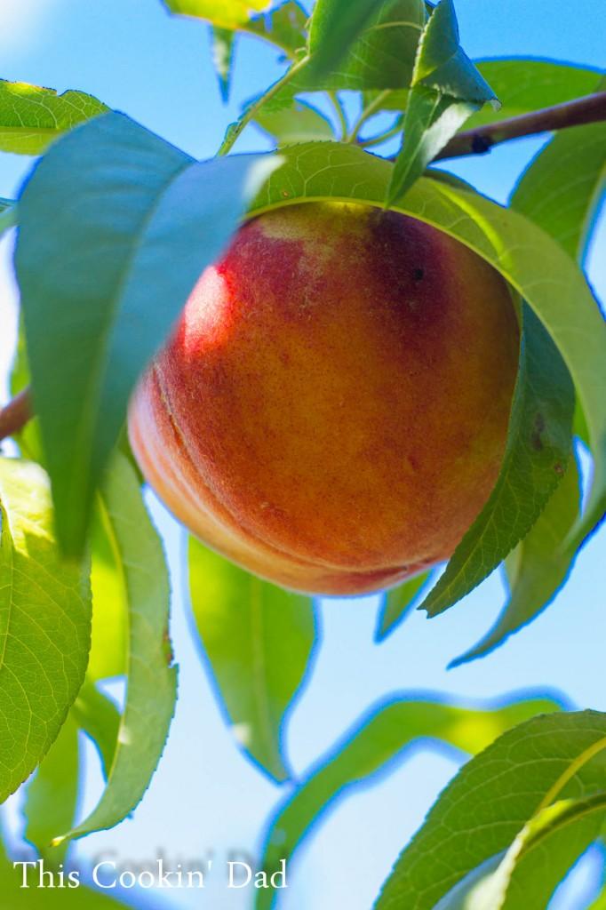 Peaches 2014-3
